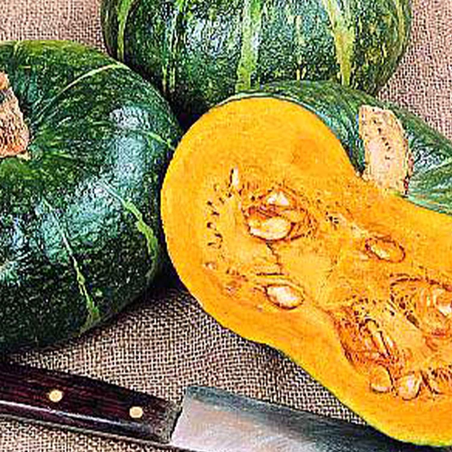 Organic Burgess Buttercup Bush Squash Seed - 4 g ~20 Seeds - Non-GMO, Open Pollinated, Heirloom, Vegetable Gardening Seeds - Winter Squash