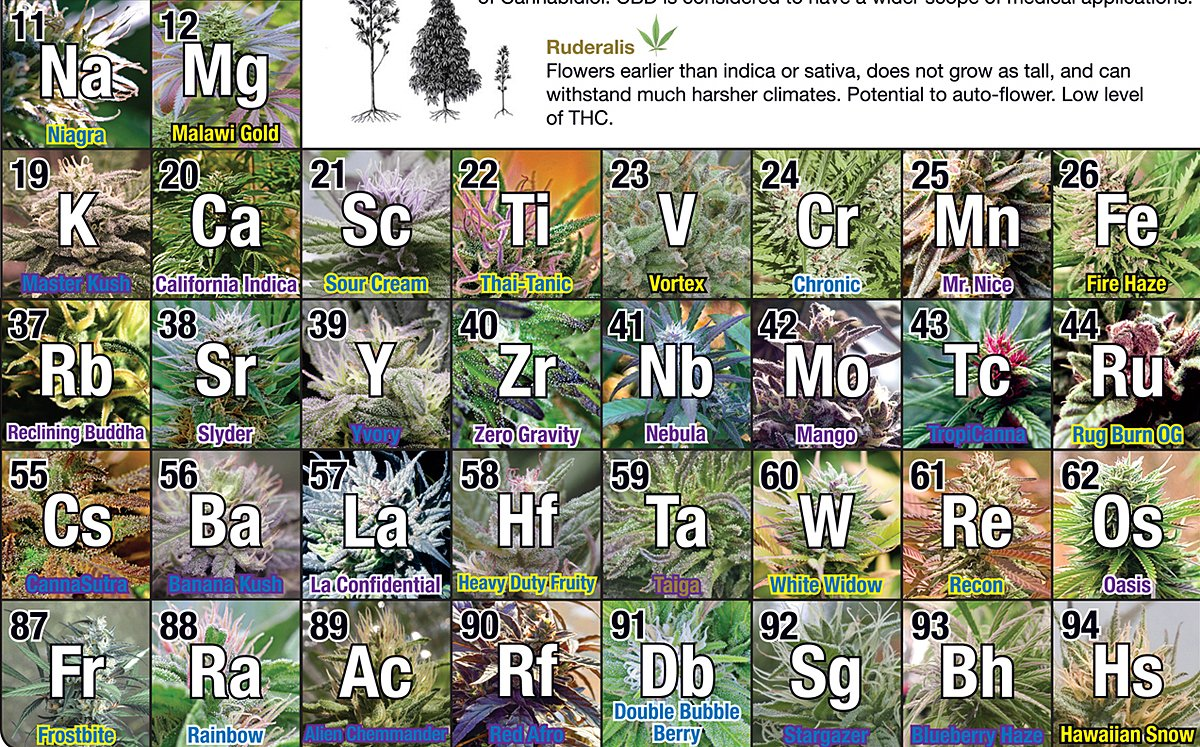 Periodic Table of Cannabis (36
