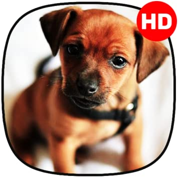 Amazon Com Cute Dogs Wallpaper Cute Puppy Wallpaper Appstore