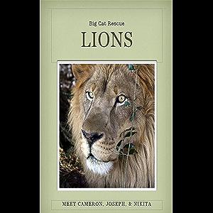 Lions of Big Cat Rescue: Meet Lions Joseph, Cameron, & Nikita
