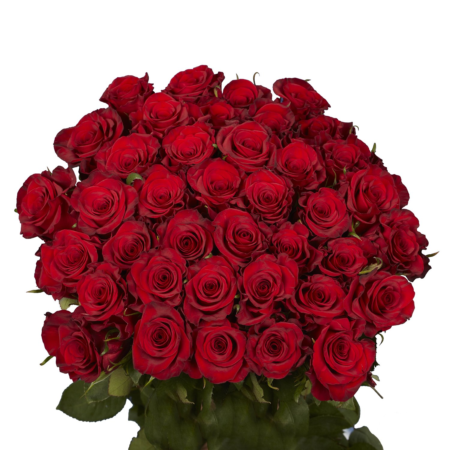 GlobalRose 50 Red Roses - Beautiful Fresh Cut Flowers- Lovely Natural Blooms by GlobalRose