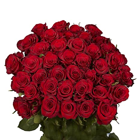 GlobalRose 50 Red Roses , Beautiful Fresh Cut Flowers, Lovely Natural Blooms