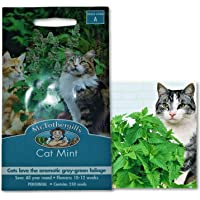 Catnip Seeds Packet for The Fussy Cat Nip Seed Package Cat Mint Magic for Feline
