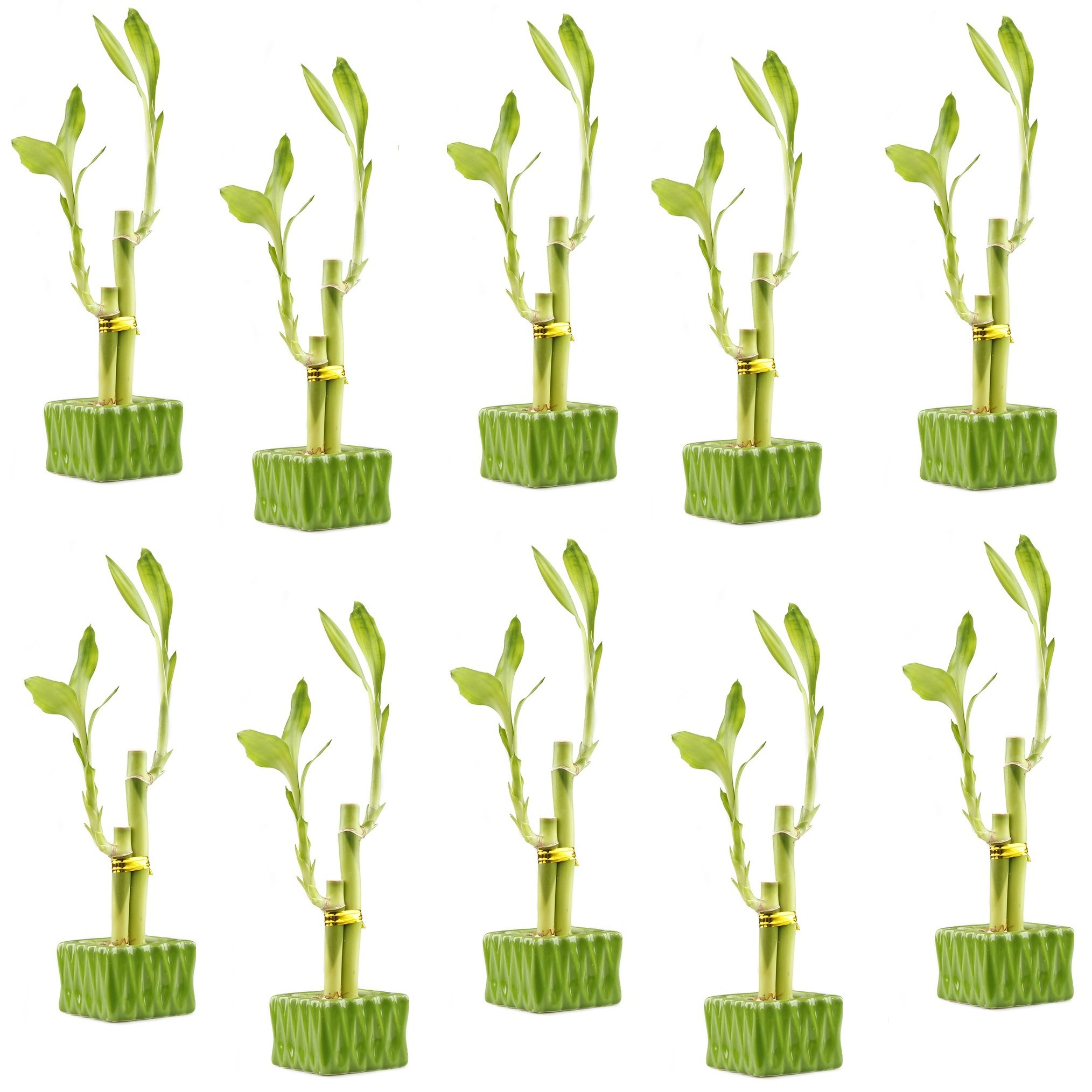 NW Wholesaler - Lucky Bamboo''Love'' Two Stalk Arrangement with Square Accented Pot (Set of 10, Green)