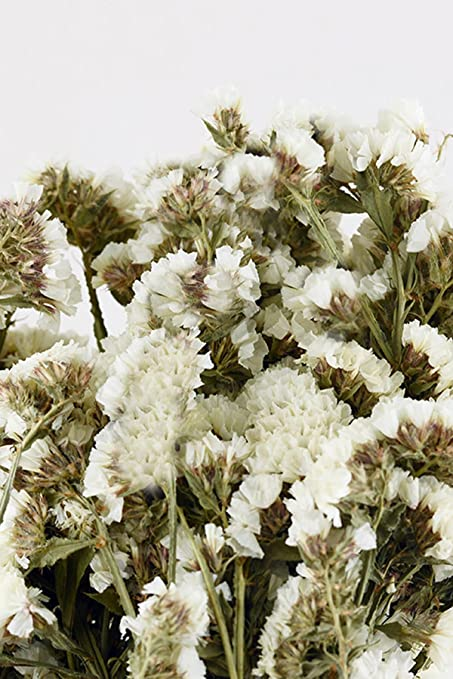 Amazon dried white statice flowers home kitchen dried white statice flowers mightylinksfo