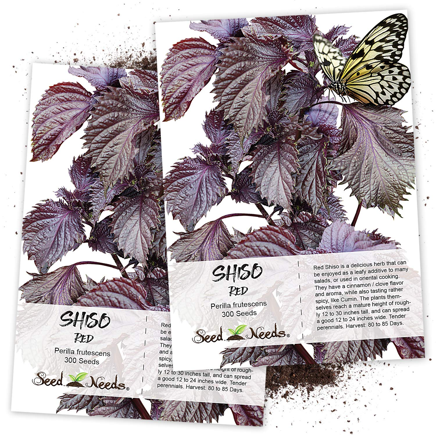 Seed Needs, Red Shiso Herb (Perilla frutescens) Twin Pack of 300 Seeds Each Non-GMO