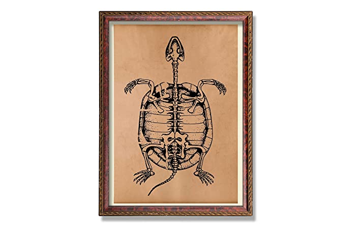 Amazon Anatomy Art Print Turtle Poster Skeleton Decor Handmade