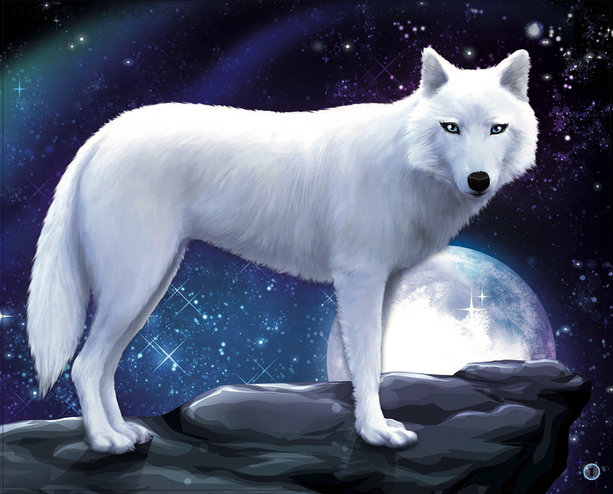 Animal Style Moon Diamond Loup Style French Edition 9782809659344 Amazon Com Books