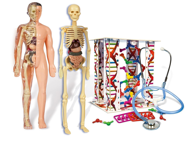 Clementoni - El Cuerpo Humano: Amazon.es: Juguetes y juegos