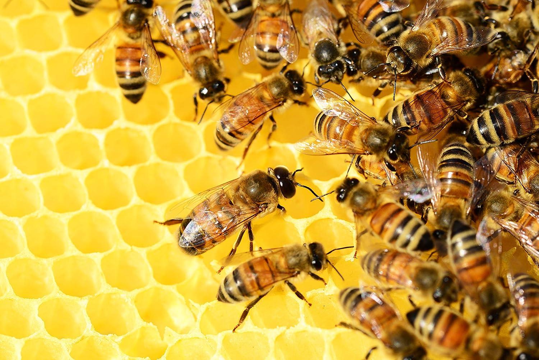 Miel de abeja pura España 100% Natural, Miel cruda, Pack de degustación de miel pura - 2 Kg: Amazon.es: Alimentación y bebidas