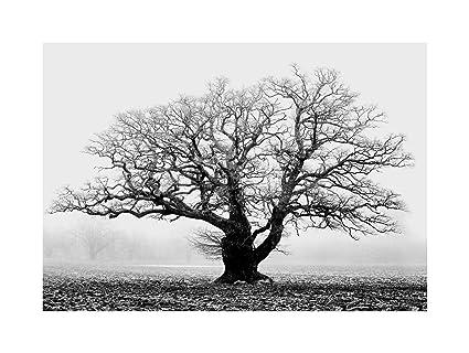Amazon.com: OLD OAK TREE BLACK WHITE MIST FOG PHOTO FRAMED ART PRINT ...