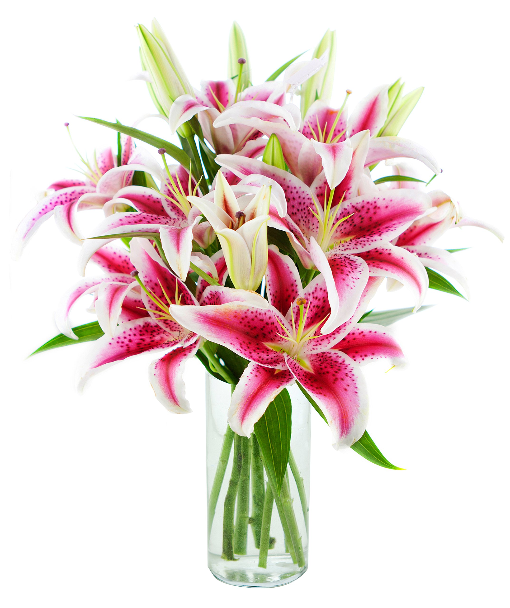 Amazon bouquet of 8 fresh cut stargazer lilies with vase by kabloom bouquet of 8 fresh cut stargazer lilies with vase izmirmasajfo