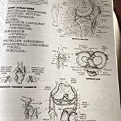 The Anatomy Coloring Book Amazoncouk Wynn Kapit Lawrence M
