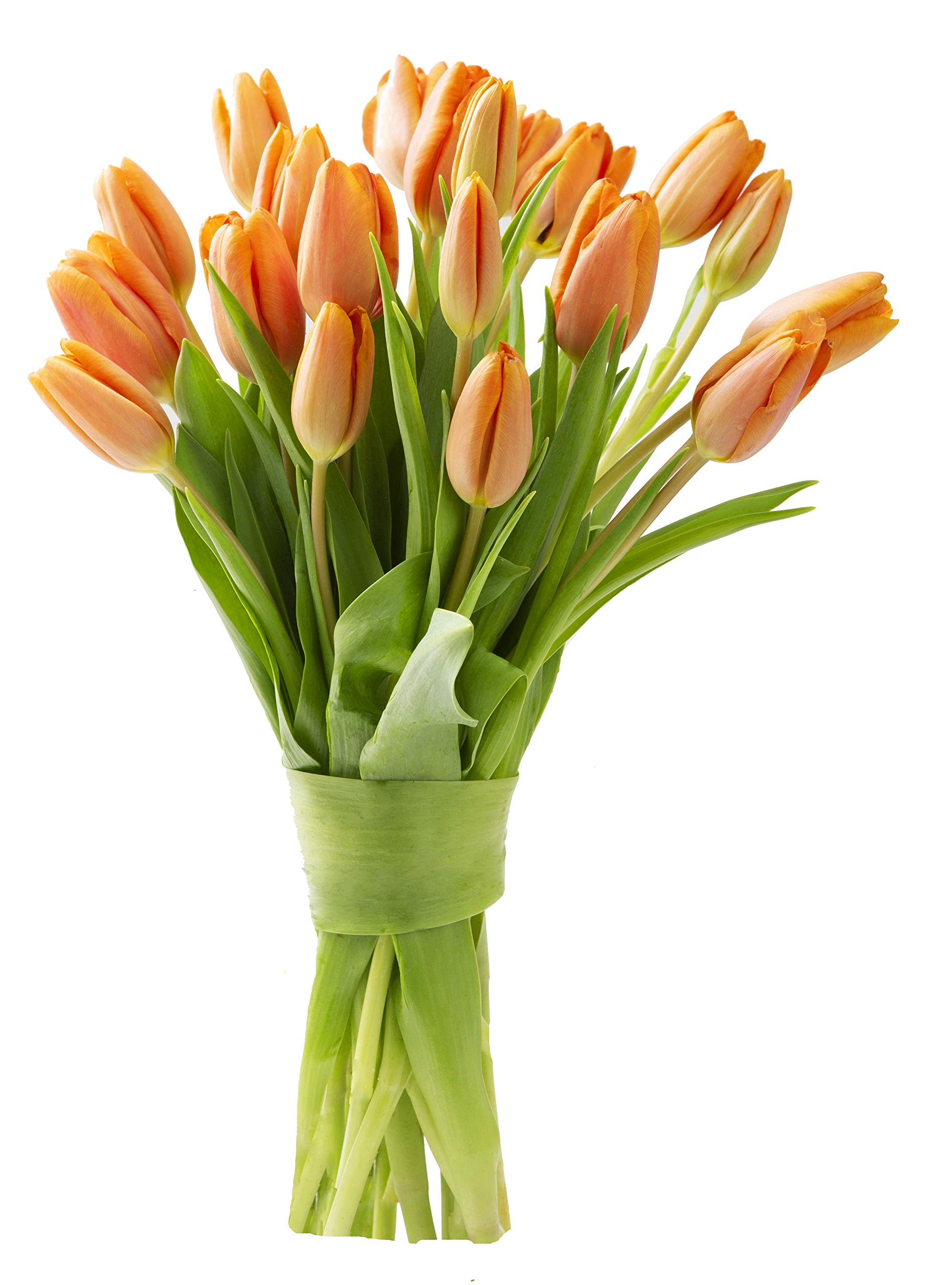 Blooms2Door 20 Orange Tulips (Farm-Fresh Flowers, Cut-to-Order, and Homegrown in the USA)