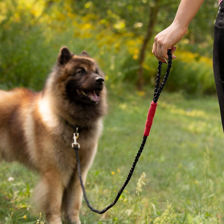 Gratis E-Book Golden Pets Paracord Hundeleine I Handschlaufe I 1,7m I reflektierend extrem leicht /& robust I geflochtene hochwertige F/ührleine I kleine gro/ße Hunde I