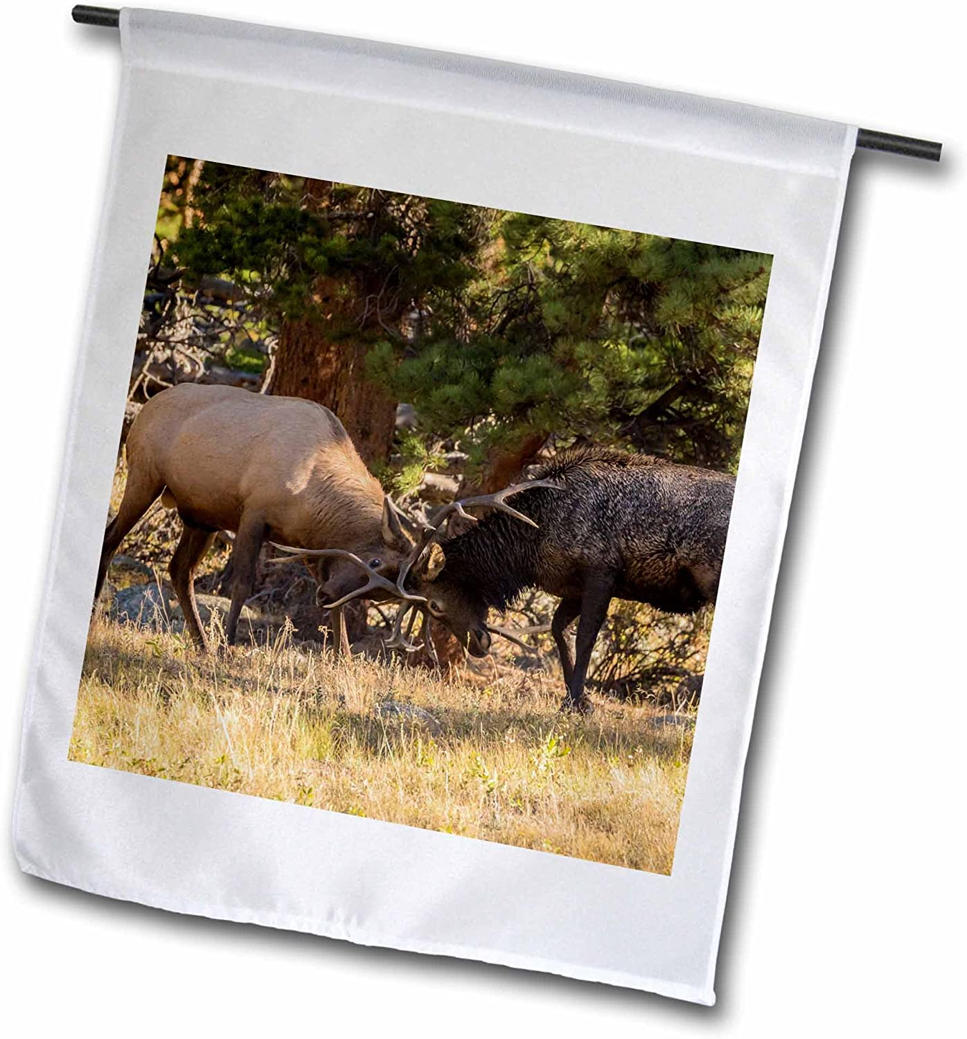 3dRose fl_278742_1 USA, Colorado, Rocky Mountain National Park. Male elks Sparring Garden Flag, 12 x 18