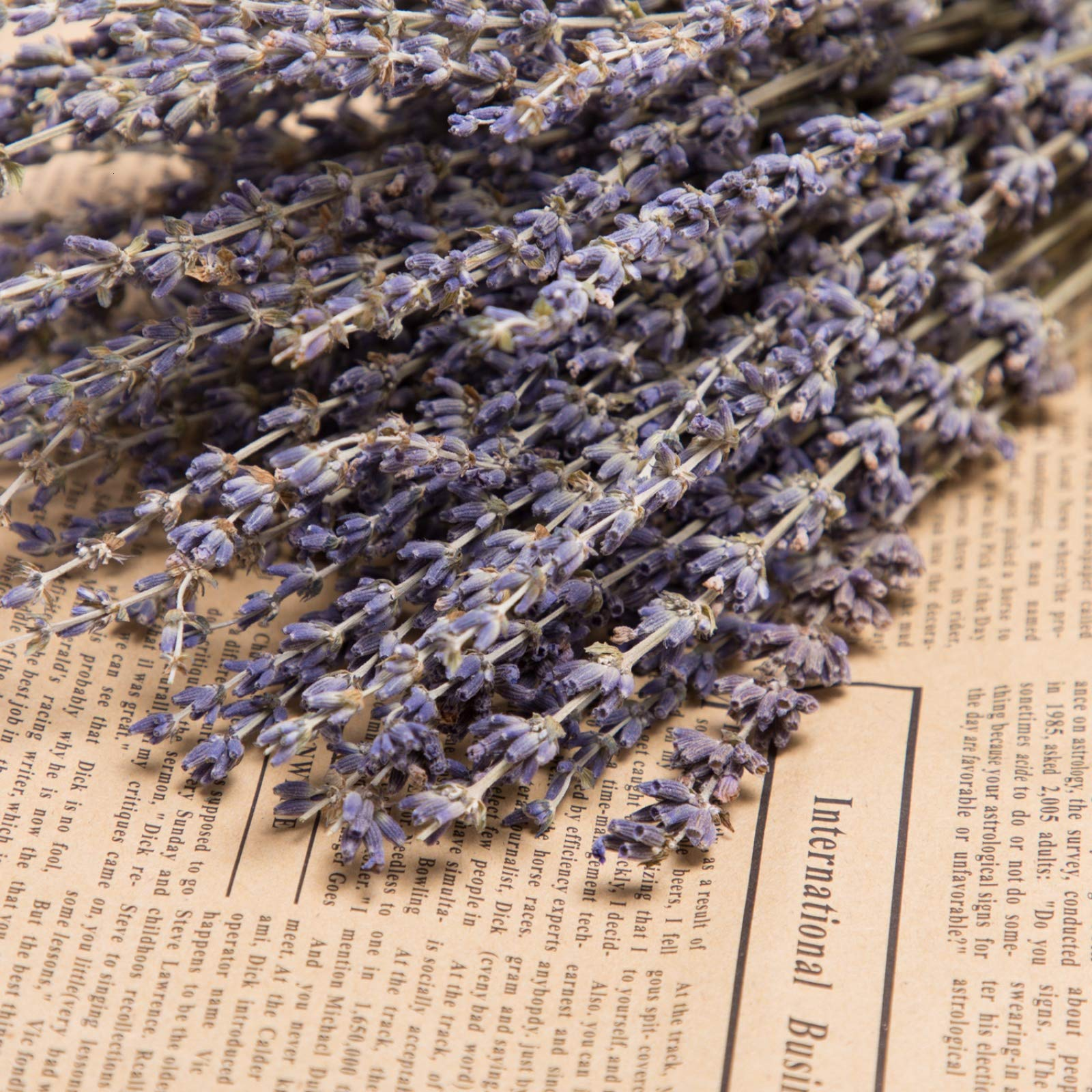 Timoo Dried Lavender Bundles 100% Natural DriedLavenderFlowers for Home Decoration, Photo Props, Home Fragrance, 2 Bundles Pack by Timoo (Image #6)
