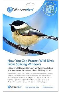 Amazoncom  Window Alert Hummingbird Decals  Bird Decals For - Window alert decals for birds