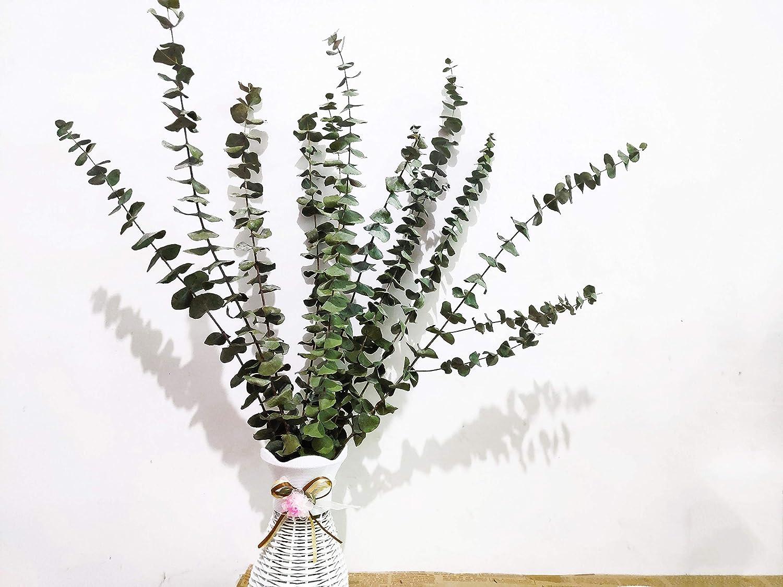 10 pcs Bouquet Dried Natural Eucalyptus Branches Leaves G3L4 Flower K3T6