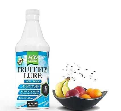 Fruit Fly killer Trap- Eco Defense