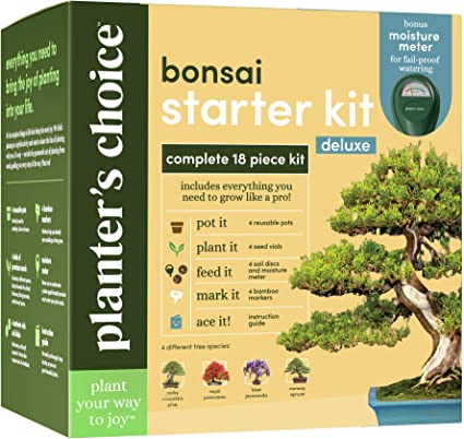 Amazon Com Bonsai Tree Growing Kit Grow 4 Indoor Bonsai Trees Plant A Garden From Seeds Unique Gardening Gifts For Women Men Gardeners Unusual Gift Ideas