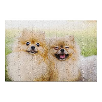 Two Funny Smiling Zverg Spitz Pomeranian Puppies Posing on Grass 9020725 (Premium 500 Piece Jigsaw Puzzle for Adults, 13x19, Made in USA!): Toys & Games