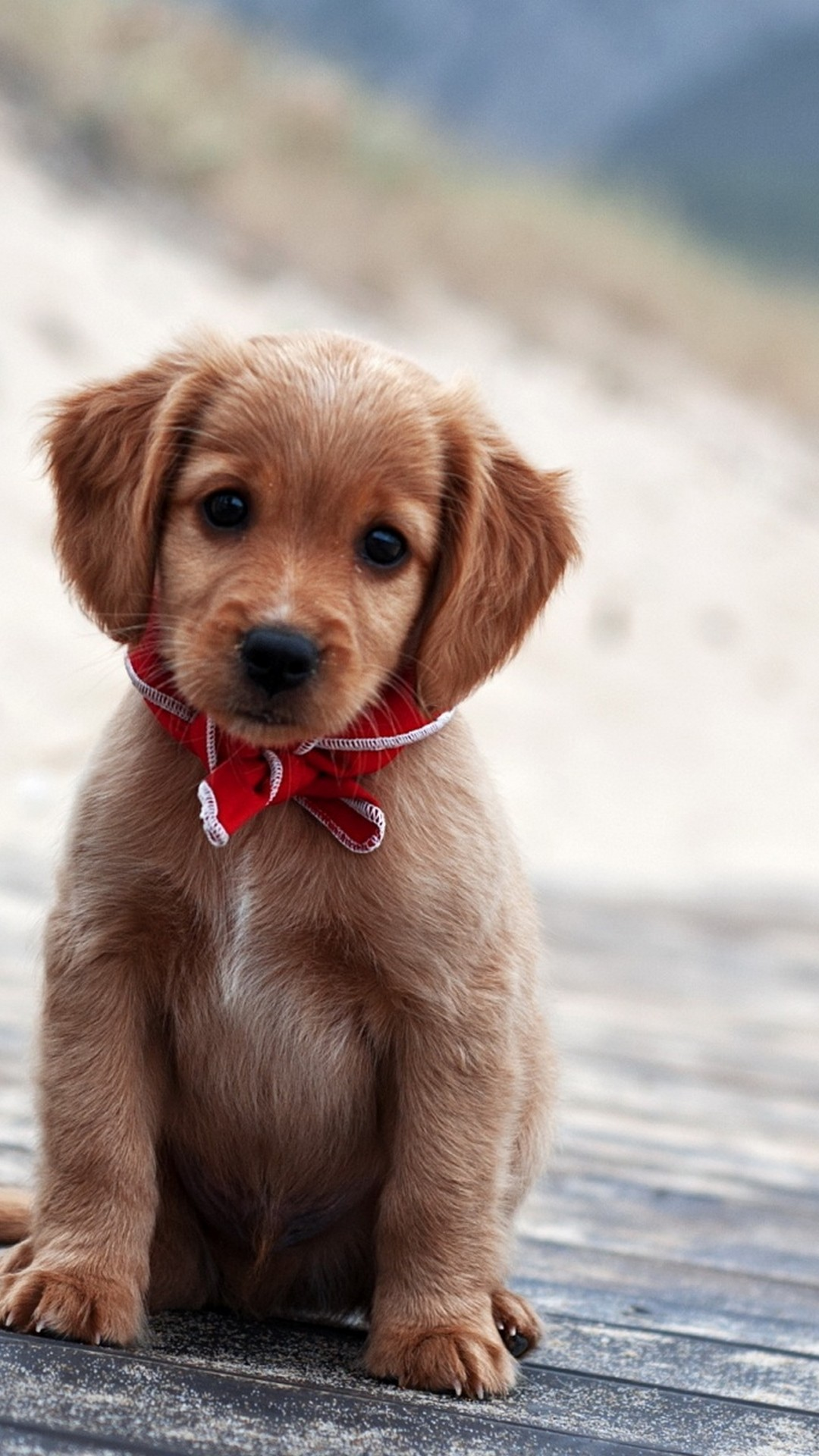 Amazon Com Puppy Wallpaper Appstore For Android