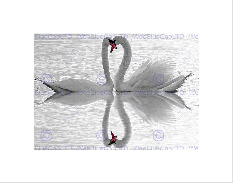 SWANS LOVE BLACK WHITE ROMANCE SWAN BLACK FRAMED ART PRINT PICTURE B12X9683