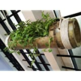 Naoetm Hanging Planter Stand - Pale Yellow To Green - Wooden