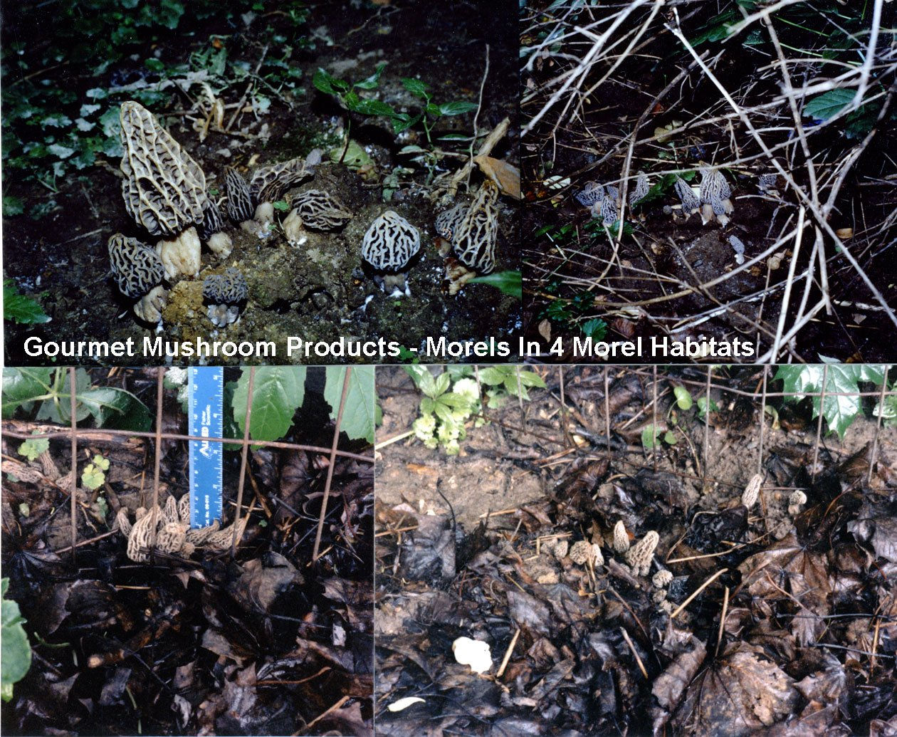 amazon com morel habitat kit backyard morel mushroom growing