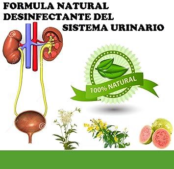 RENACALM FORMULA NATURAL DESINFECTANTE DEL SISTEMA URINARIO