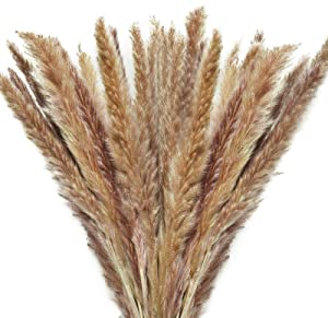 Timoo Dried Pampas Grass 60stem Natural Pampas Grass Decor Fluffy Dried Flowers for Vase, Home Decoration, Photo Props (17inch)