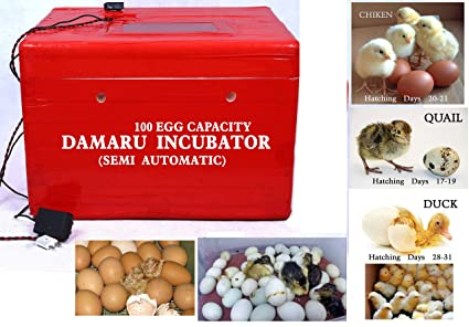 DAMARU 100 Egg Capacity Semi Automatic Thermocol Incubator/Chicken Ducks,  Pigeons Quail Hatchery Machine for Eggs