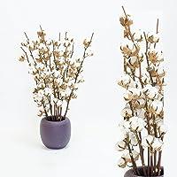 5 Zweige Baumwolle mit 5-7 Blüten getrocknet, 60 cm +/- Dekoration - lange haltbar - echte Zweige - zum basteln oder als Geschenk, Naturprodukt