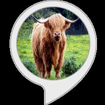 Scottish Towns and Cities Quiz: Amazon co uk: Alexa Skills
