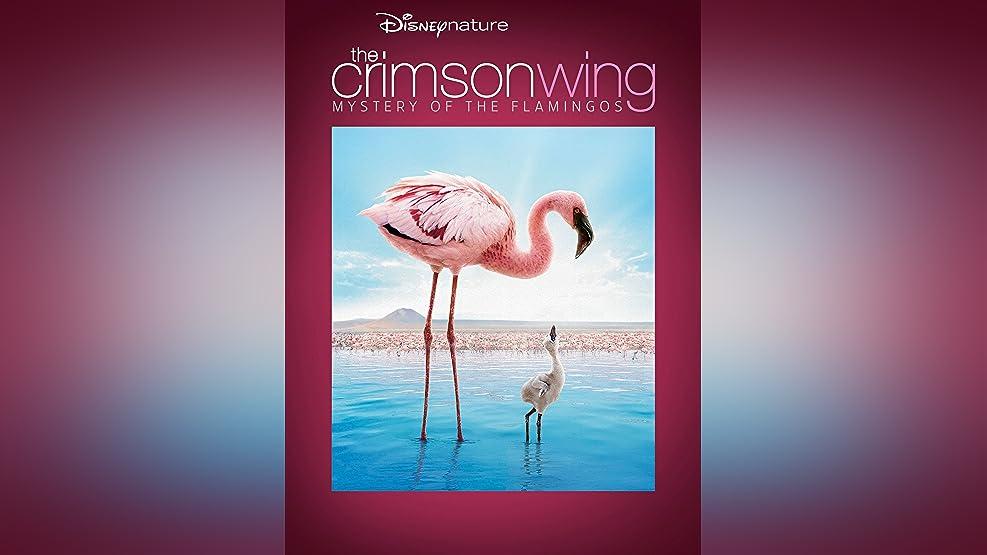 Disneynature Crimson Wing