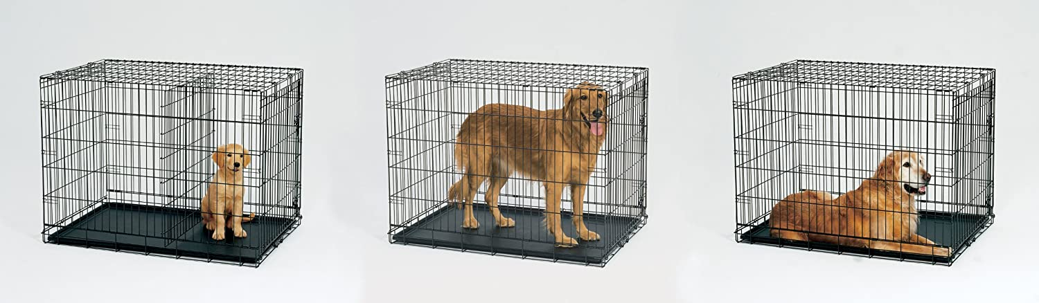 Amazon Midwest Life Stages Folding Metal Dog Crate Pet
