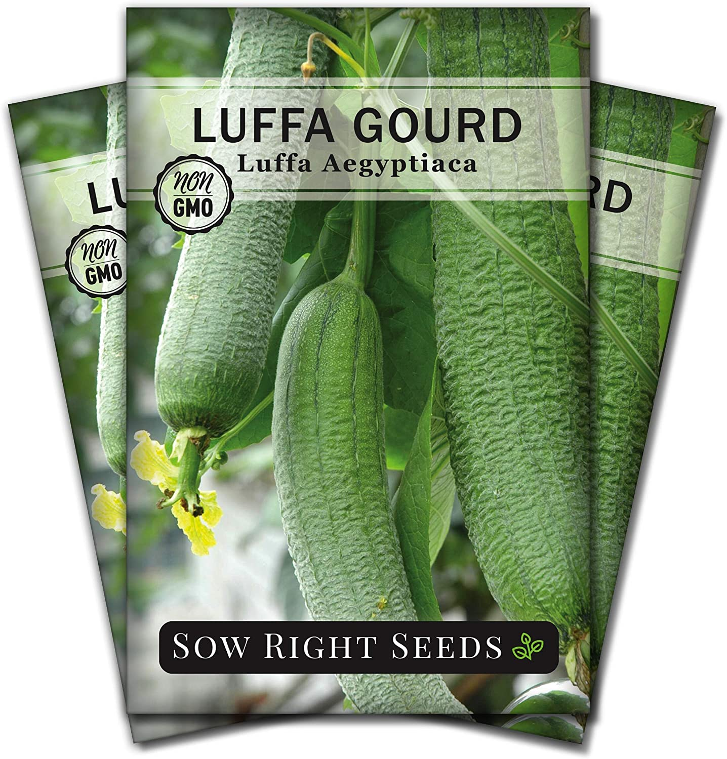 Sow Right Seeds - Luffa Gourd Seed for Planting - Non-GMO Heirloom Packet with Instructions to Plant a Home Vegetable Garden - Great Gardening Gift (3)
