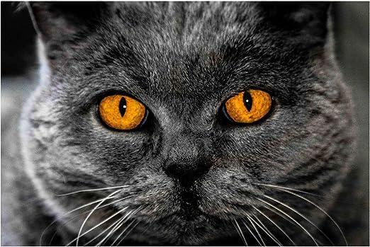 Puzzle 1000 Piezas Niños Adulto Gato De Ojos Amarillos Decoración ...