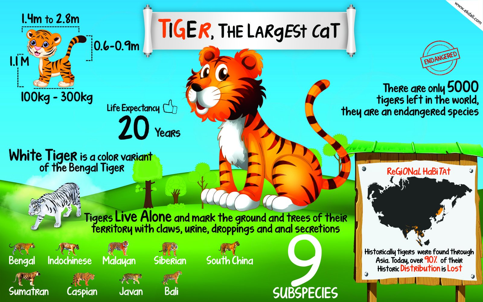 Image result for poster about tigers kids