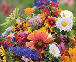 David's Garden Seeds Wildflower Butterfly Hummingbird Mix 9671 (Multi) 500 Non-GMO, Open Pollinated Seeds