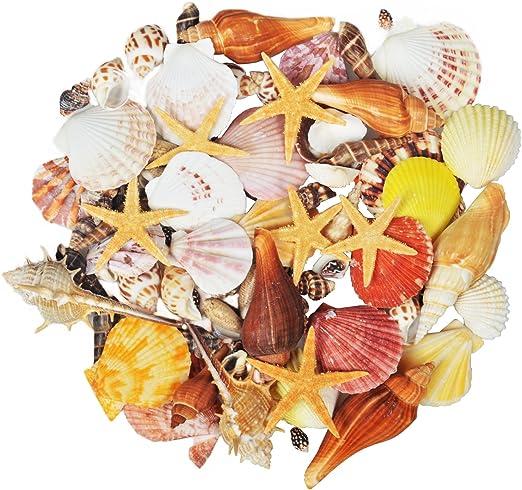 Jangostor 100 PCS Coquillages Mixte Océan Plage Coquillages,Différentes Tailles Coquillages Colorés Naturels Étoile de mer Parfait pour Les
