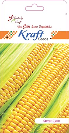 Sweet Corn F1 Hybrid Vegetable Seeds By Kraft Seeds