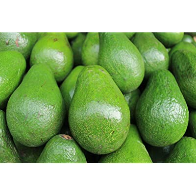 Fruit Avocado Tropical 1'-3' Live Big Tree Outdoor Garden tkopic : Garden & Outdoor