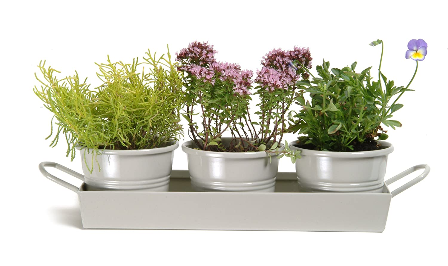 Garden Trading Pots on a Tray in Clay (Set of 3) Garden Trading Ltd