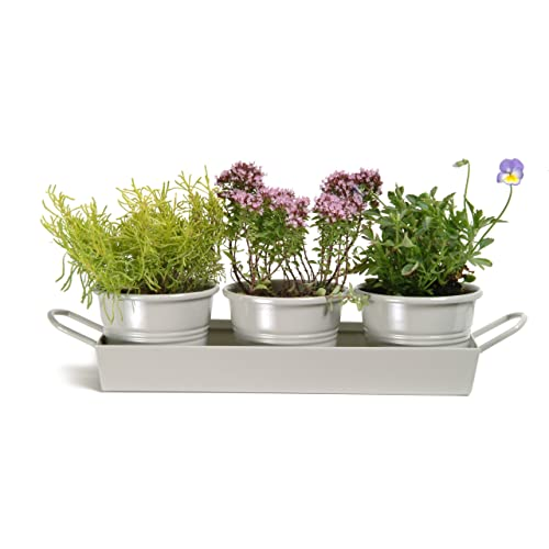 Garden Trading Pots on a Tray in Clay (Set of 3)