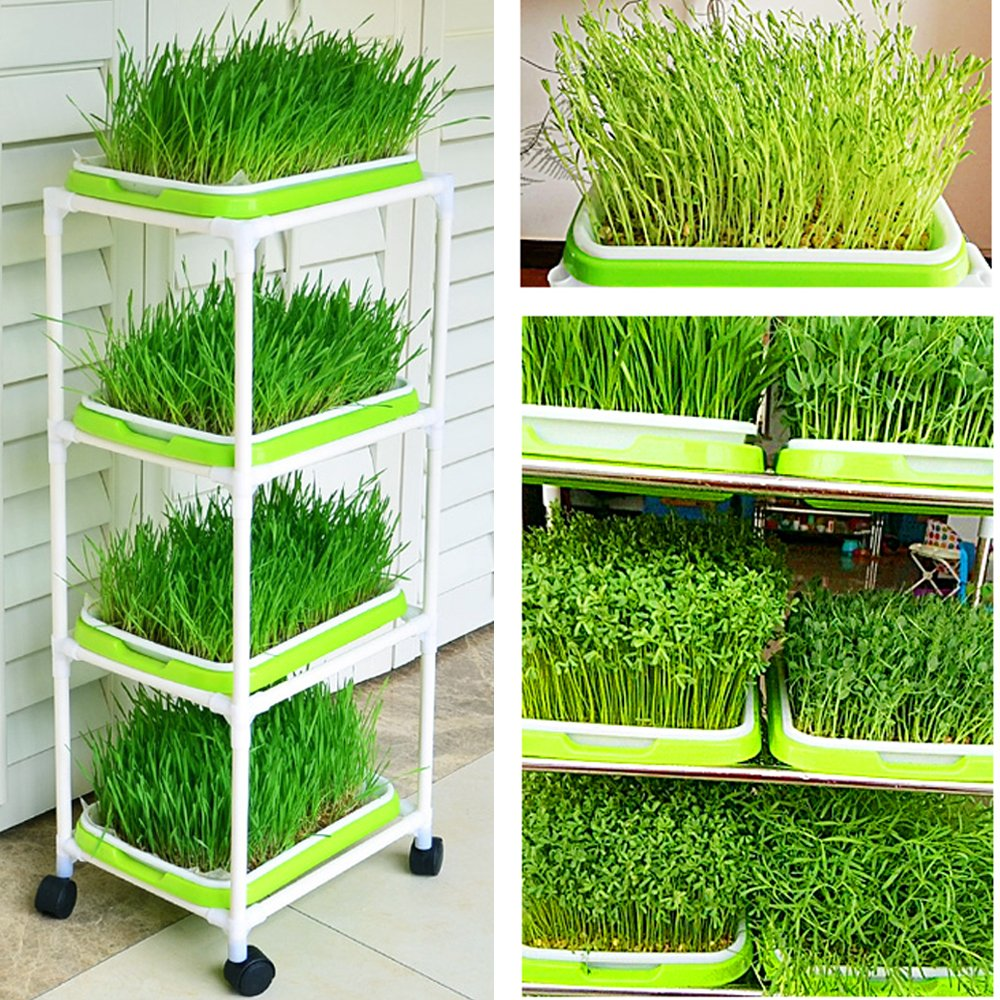 Seed Sprouter Trays with 4 Layers Shelf Soil-Free Healthy Wheatgrass Seeds Grower & Storage Trays for Garden Home by LeJoy Garden (Image #3)