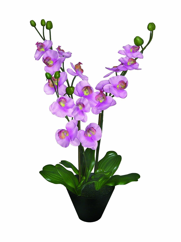 artfleur 301467720 Phalaenopsis, getopft, 72 cm, hot pink