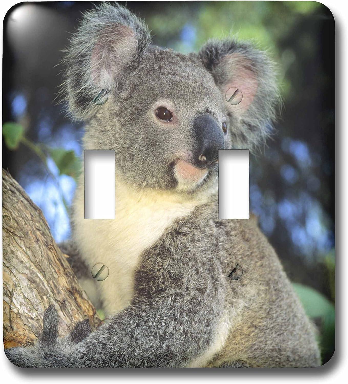 3drose Danita Delimont Bears Koala Bear Australia Eucalyptus Tree Sa01 Ksc0000 Kevin Schafer Double Toggle Switch Lsp 85322 2 Wall Plates