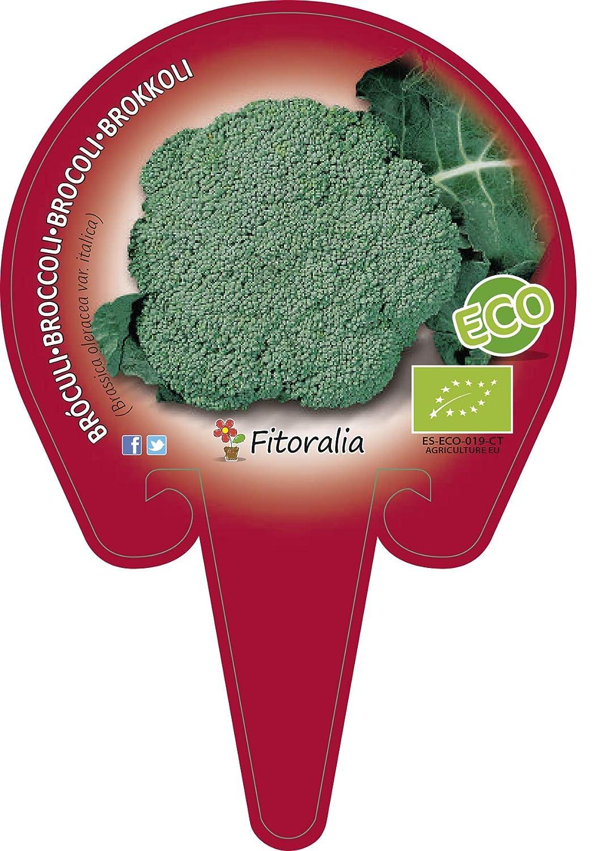 Pack Brócoli 12 Ud. ECO: Amazon.es: Jardín